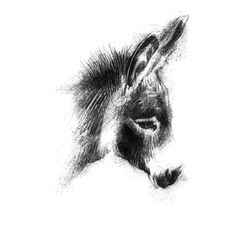 Animal Sketches, Animal Drawings, Donkey Drawing, Cartoon Cow, Animal Doodles, Sketch A Day, Drawing Projects, Sketch Painting, Pencil Art Drawings