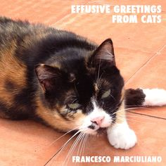 Unpublished Coffee Table Books: European Cat Edition