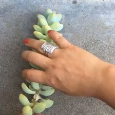 """Succulents garden 813462751422772508 - If you enjoyed our article about """"Best practices for watering succulents💦"""" (link in bio). Comment below if you would like to see us do an article about how successfully propagate Source by succulentcity Propagating Succulents, Succulent Gardening, Succulent Care, Succulent Terrarium, Succulent Containers, Plant Propagation, Gardening Vegetables, Gardening Tools, Flower Gardening"""