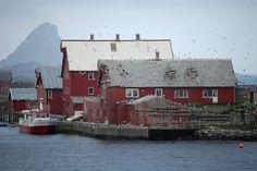 Inhabitants of Røst, Lofoten, Norway Oslo, Norway Viking, Iceland Island, Beautiful Norway, Lofoten, Honeymoon Destinations, Sweden, Scandinavian, Cool Photos