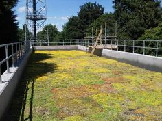 Green Roofs for Auckland, Christchurch & NZ Wide Living Roofs, Roof Covering, Auckland, Wild Flowers, Sidewalk, Deck, Architecture, Outdoor Decor, Green