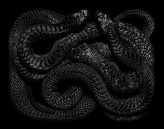 Art of the Serpent – Guido Mocafico Snake Wallpaper, Skull Wallpaper, Iphone Wallpaper, Year Of The Snake, Snake Art, Reptiles And Amphibians, Animal Totems, Black Mamba, Spirit Animal