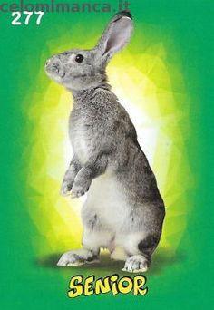 Amici Cucciolotti 2017: Fronte Figurina n. 277 Coniglio