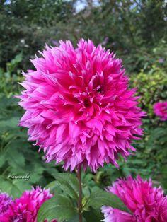 Love Flowers, Beautiful Flowers, Bloom, Fine Art, Garden, Nature, Plants, Flowers, Flower