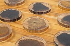 "Petrified Petrified Wood Coasters Petrified Wood in Clear Resin Diameter: 3.5"" Height: 0.5"""
