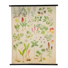 vintage poster pull-down school wall chart meadow grassland plants flowers r0192