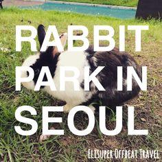 Parc Montmartre: Rabbit Park In Seoul   Elisuper Offbeat Travel http://www.elisuperoffbeattravel.com/2015/08/parc-montmartre-rabbit-park/
