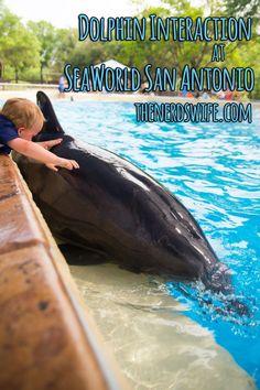 Dolphin Interaction at SeaWorld San Antonio