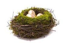 Bird Nest with Gilded Eggs & Moss