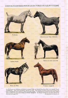 Gorgeous, Horses..Original,  Color, Vintage Book Pages, French, Encyclopedia Paper,Affordable Art,Scrapbooking. $4.00, via Etsy.