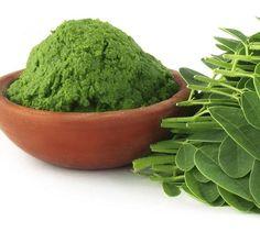 Ayurveda, Moringa Leaves, Moringa Powder, Healthy Herbs, Herb Recipes, Superfoods, Turmeric, Kale, The Help