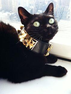 Hermes cat