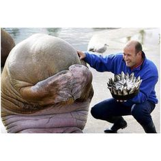 A walrus' reaction after getting a birthday cake made entirely of fish