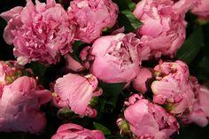 Uzwei Store in Hamburg Rose, Simple, Flowers, Plants, Editorial, Beautiful, Hamburg, Floral, Roses
