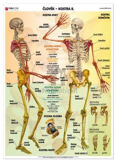 Člověk - Kostra ll. English Language, Human Body, Health Fitness, Activities, Education, Learning, Children, School, Dream Job