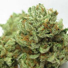 master kush marijuana strain