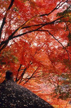 Autumnal tints, Koishikawa-Kouraku-en, Tokyo, Japan