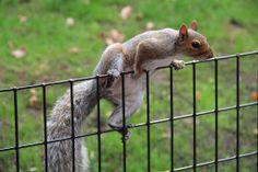 new york squirrel | Flickr - Photo Sharing!