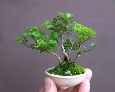 Bonsai in Hand (Worth Two on the Bench) | Bonsai Bark