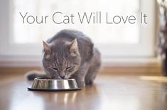 Cat Nutrition Diet Nutritional Needs of Senior Cats Halloween Cocktails, Treatment For Kidney Disease, Fortified Cereals, Calcium Deposits, Cat Nutrition, Son Chat, Carnivore, Calorie Intake, Bone Health