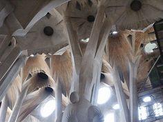 Sagrada Familia (organische architectuur)