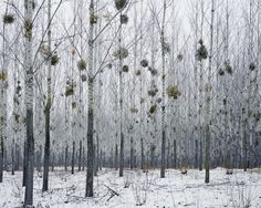 Postcards from the ruins: life at the desolate edge of eastern Europe – in pictures. Forest with Mistletoe, photographer Tamas Dezso has spent years on the margins of society in Romania and Hungary. Photo Fair, Stage Set, Grand Palais, Paris Photos, Illustrations, Eastern Europe, Mistletoe, The Guardian, American