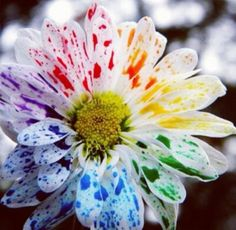 Water color daisy. Nature