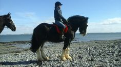 Paddys first time at the beach Beach Rides, Small Island, Trekking, Horses, Dogs, Animals, Animaux, Doggies, Horse