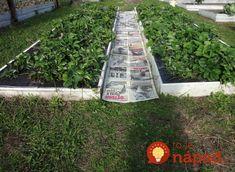 Naša čitateľka Magda sa s nami podelila o skvelý trik, ktorý už roky využíva vo svojej záhrade a podľa jej slov sa takto dokáže zbaviť buriny na celú sezónu. Za vyskúšanie to rozhodne stojí!