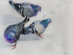 birds гули sm watercolor on paper Watercolor Bird, Watercolor Artists, Animal Drawings, Drawing Animals, Pigeon Pictures, Flower Artwork, Bird Art, Amazing Art, Photo Art