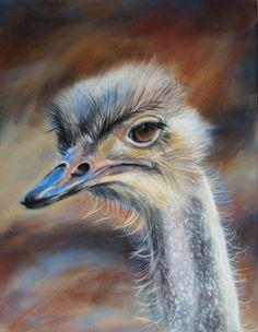 Eline van Waardenburg - Struisvogel