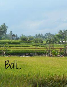 Bali Quotes, Vineyard, Outdoor, Outdoors, Outdoor Games
