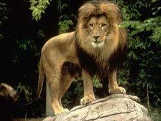 Kieran's Blog: los mejores tatuajes de leones