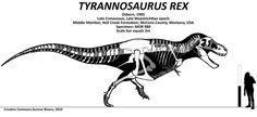 Is Tyrannosaurus now considered the largest theropod again? - Quora MOR 980 Paper Airplane Models, Spinosaurus, Dinosaur Art, Tyrannosaurus Rex, Prehistoric Animals, Fossils, Geology, Moose Art
