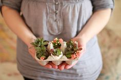 Hen and Chicks in eggshells.