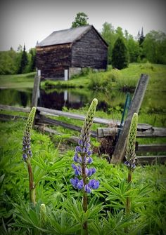 Oh, Montana, I miss you....the wildness, the country lanes, the mountain trails, the desserted cabins....so, so beautiful~