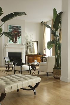 Banana Plant - Indoor Tree - White and Neutral Living Room