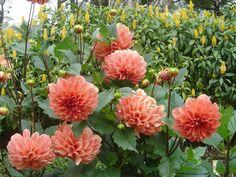 fleur - recherche google | des fleur! | pinterest | search and google