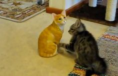 Epic Battle: Ridiculously Cute Kitten Tries to Fight Ceramic Cat - Pet360 Pet Parenting Simplified