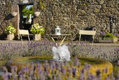 Tankardstown House Hotel Slane, Co. House Gardens, Blue Books, Maine House, Luxurious Bedrooms, Beautiful Gardens, Spring Time, Contemporary Style, Bliss, Home And Garden