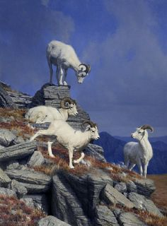 """""""Above Us Only Sky"""" - dall sheep painting by Nancy Howe - Oil 36 x 27"""