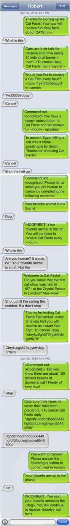 The Cat Facts:   27 Perfect Ways To Respond To A Wrong Number Text