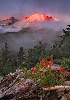 Breathtaking Sunrise Colours Over Mt Baker Desktop Background Beautiful World, Beautiful Places, Landscape Photography, Nature Photography, Sunrise Colors, Belleza Natural, Natural Wonders, Amazing Nature, Pretty Pictures