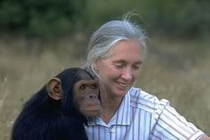 #OnThisDay In 1960, Jane Goodall arrived in present-day Tanzania to begin her famous study of chimpanzees in the wild!