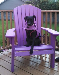 Pretty in Purple - #rescuedog Pepper loves purple...can you tell? She's come a long way...#blackdog #dogrescue #petrescue #petadoption