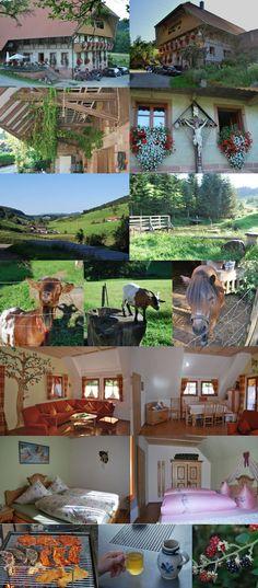 Schwarzwald: Ferienwohnungen auf aktivem Bauernhof im Kinzigtal, Naturpark Schwarzwald Mitte/Nord