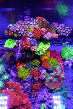 Saltwater Aquarium Fish - Find incredible deals on Saltwater Aquarium Fish and Saltwater Aquarium Fish accessories. Let us show you how to save money on Saltwater Aquarium Fish NOW! Coral Reef Aquarium, Saltwater Aquarium Fish, Saltwater Tank, Marine Aquarium, Fish Aquariums, Nano Reef Tank, Reef Tanks, Fish Tank Themes, Cool Fish Tanks