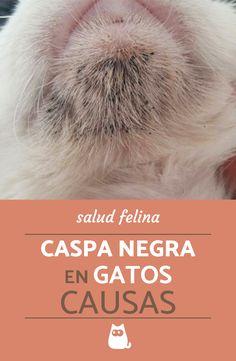 Si tu gato tiene caspa negra, ya sea en el cuerpo o en el mentón, ¡visita a tu veterinario! #ExpertoAnimal #MundoAnimal #ReinoAnimal #Animales #Naturaleza #Gatos #Felinos #Gatitos #Mascotas #SaludGatos #SaludFelina #Pulgas