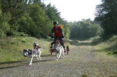 Dog pull. www.doggifit.com