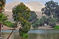 (Chapter 13): Contemporary destination  Huacachina oasis Peru